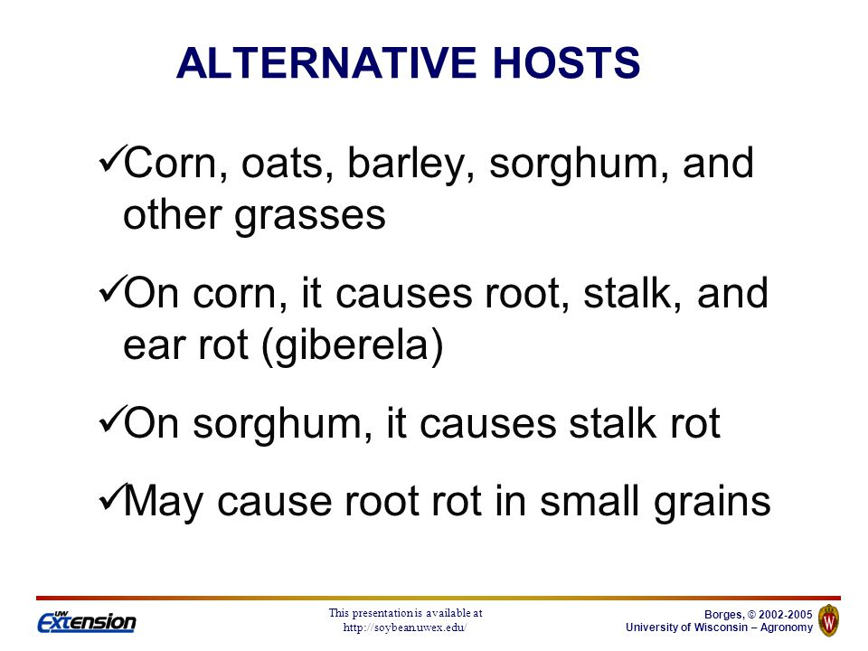 Borges, © 2002-2005 University of Wisconsin – Agronomy This presentation is available at http://soybean.uwex.edu/ Mainly crop residue of small grains and corn During moist weather, spores of the fungi are windblown or splashed onto the heads Seed borne Fusarium spp may cause seedling blight ALTERNATIVE HOSTS
