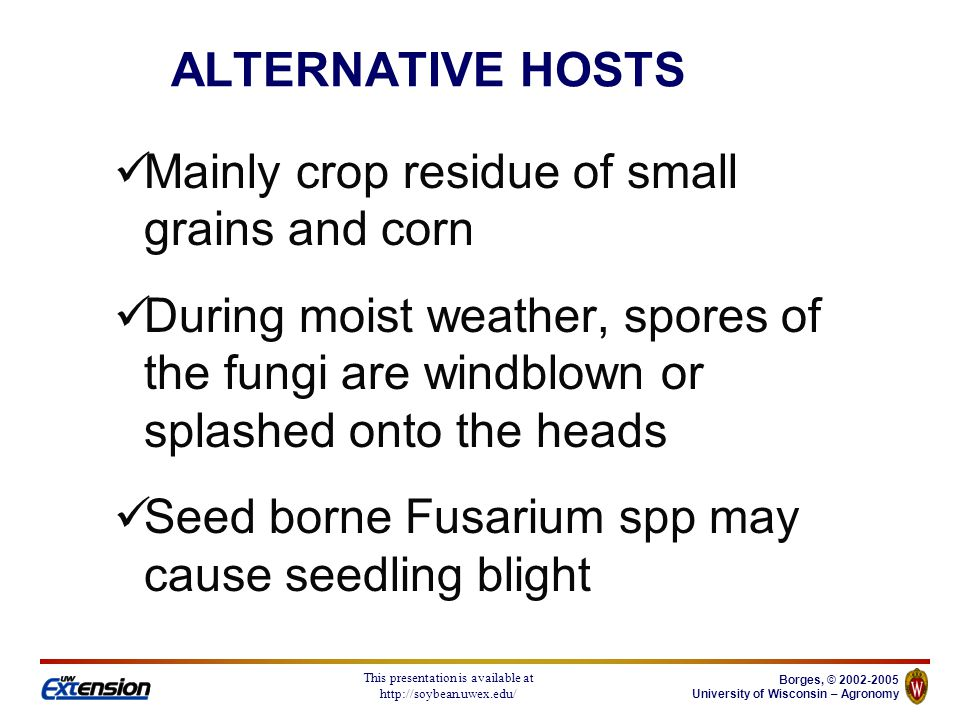 Borges, © 2002-2005 University of Wisconsin – Agronomy This presentation is available at http://soybean.uwex.edu/ Seed treatments: Help raise seed germination May prevent or reduce seedling blight DO NOT CONTROL HEAD BLIGHT Seed cleaning Set combine fans higher during harvest Foliar fungicides Not cost effective in Wisconsin SCAB MANAGEMENT