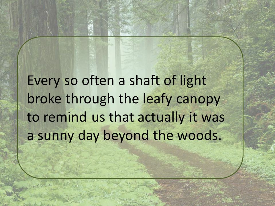 Every so often a shaft of light broke through the leafy canopy to remind us that actually it was a sunny day beyond the woods.
