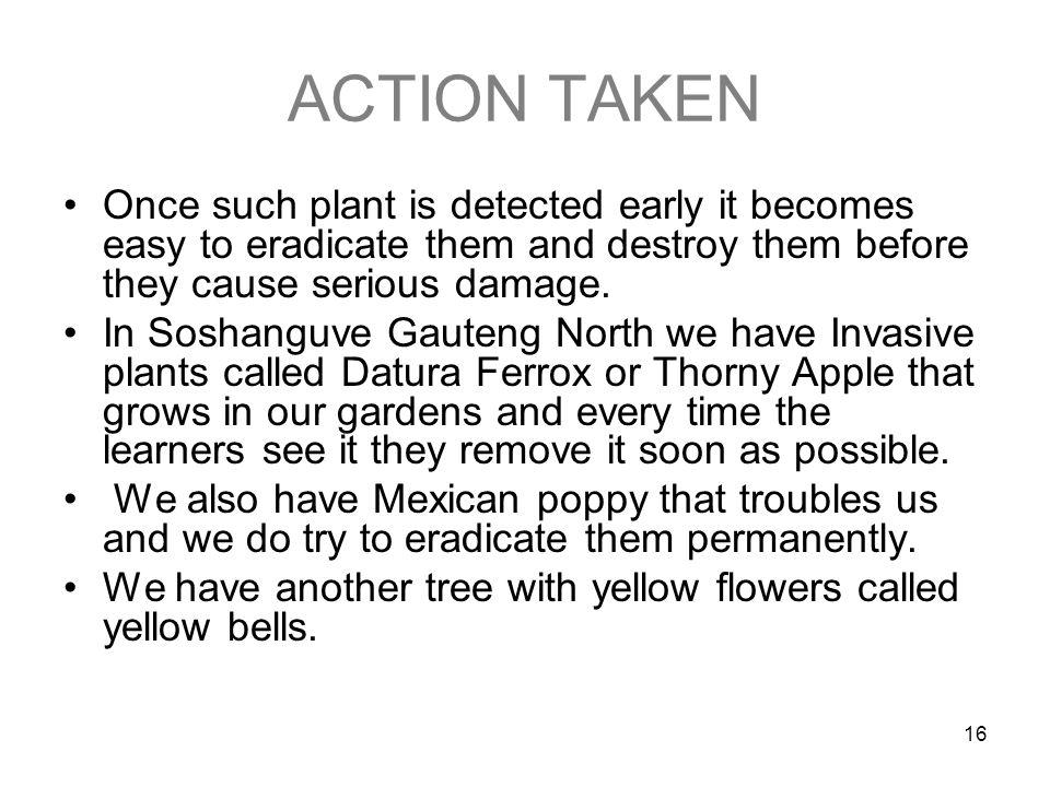 16 ACTION TAKEN Once such plant is detected early it becomes easy to eradicate them and destroy them before they cause serious damage.
