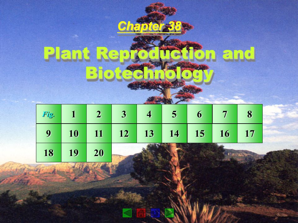 Chapter 38 Plant Reproduction and Biotechnology Chapter 38 Plant Reproduction and Biotechnology Fig. 1111 2222 3333 4444 5555 6666 7777 8888 9999 10 1