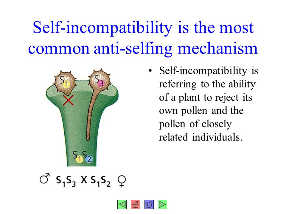 Self-incompatibility is the most common anti-selfing mechanism Self-incompatibility is referring to the ability of a plant to reject its own pollen an