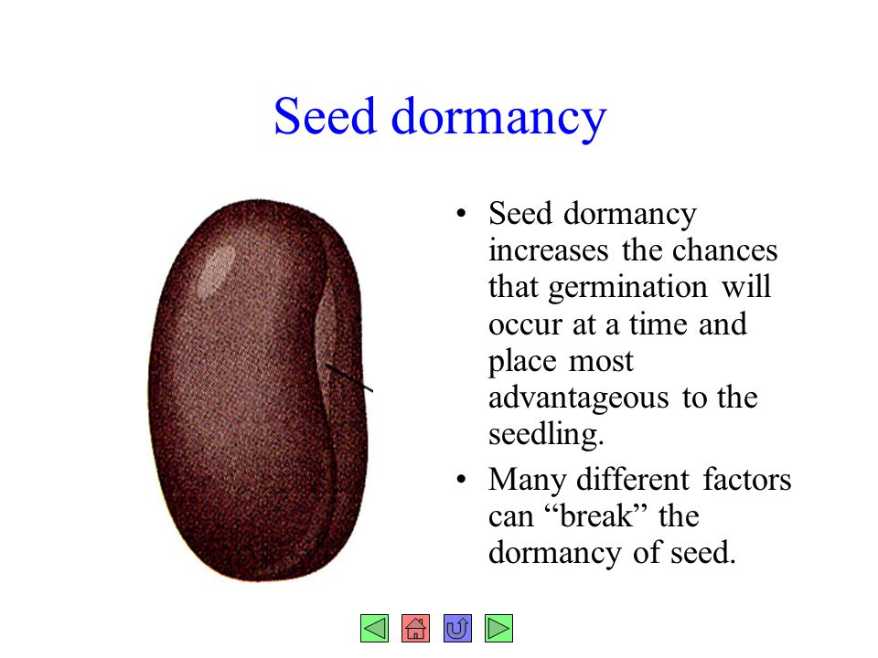 Seed dormancy Seed dormancy increases the chances that germination will occur at a time and place most advantageous to the seedling. Many different fa
