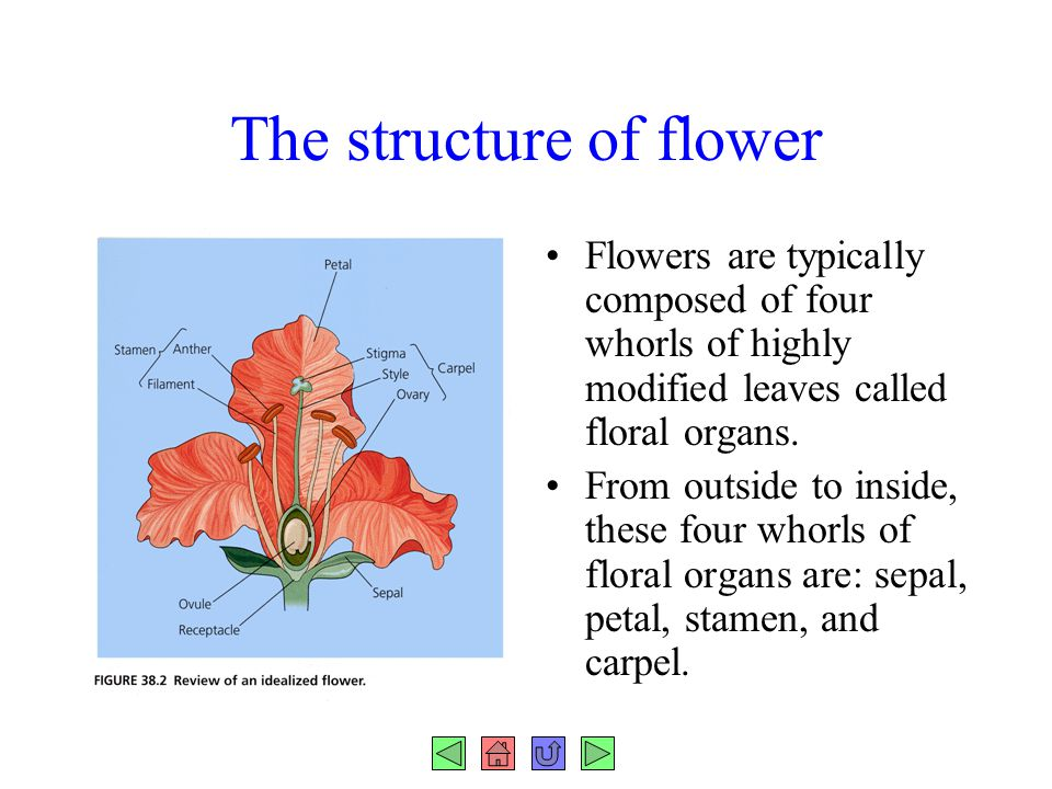 The structure of flower Flowers are typically composed of four whorls of highly modified leaves called floral organs. From outside to inside, these fo