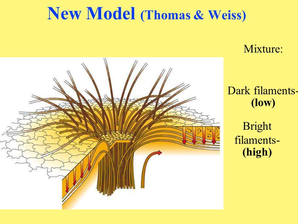 Solar cycle (ii) Sunspot min m -- no spots -- polar fields [Polar Fields: * maximum extent at s.