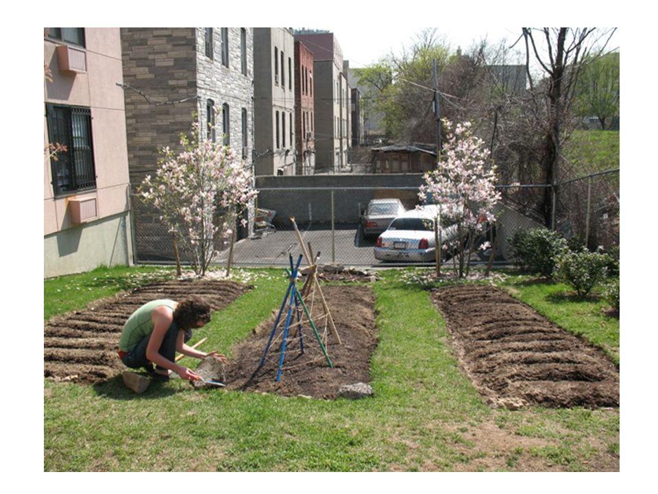 Organic Pest Control…Releasing Lady Bugs