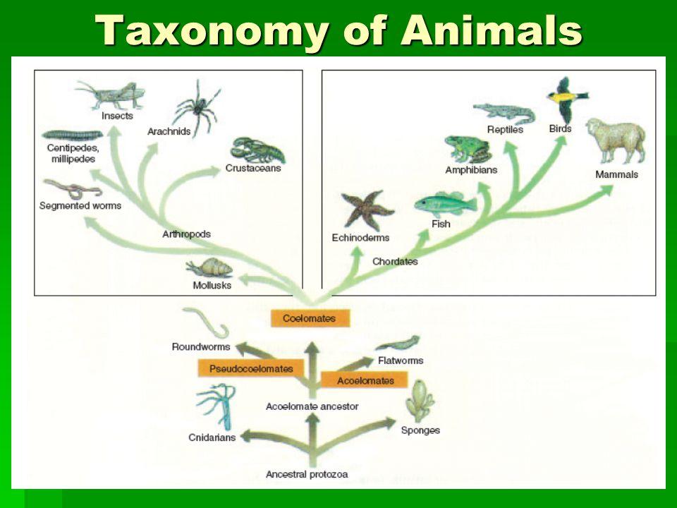 Taxonomy of Animals