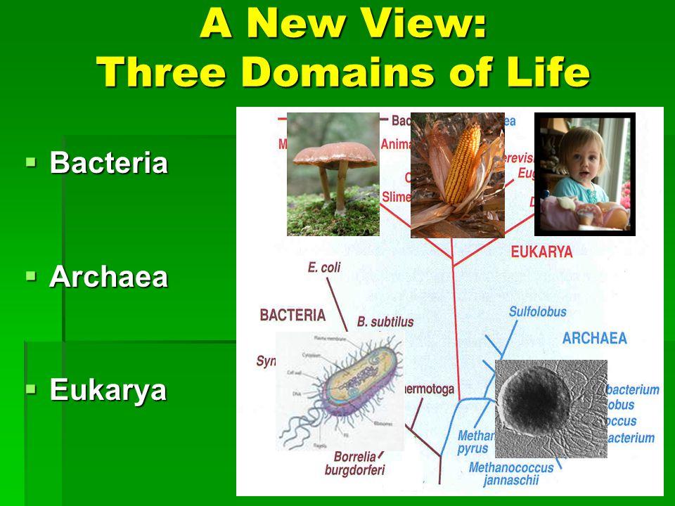 A New View: Three Domains of Life Bacteria Bacteria Archaea Archaea Eukarya Eukarya
