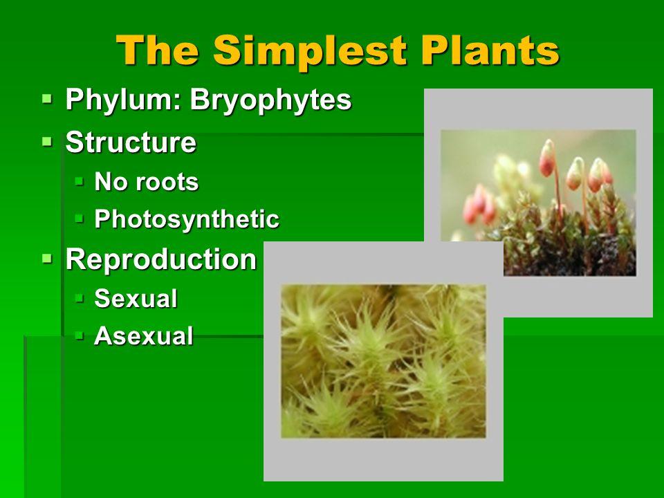 The Simplest Plants Phylum: Bryophytes Phylum: Bryophytes Structure Structure No roots No roots Photosynthetic Photosynthetic Reproduction Reproduction Sexual Sexual Asexual Asexual
