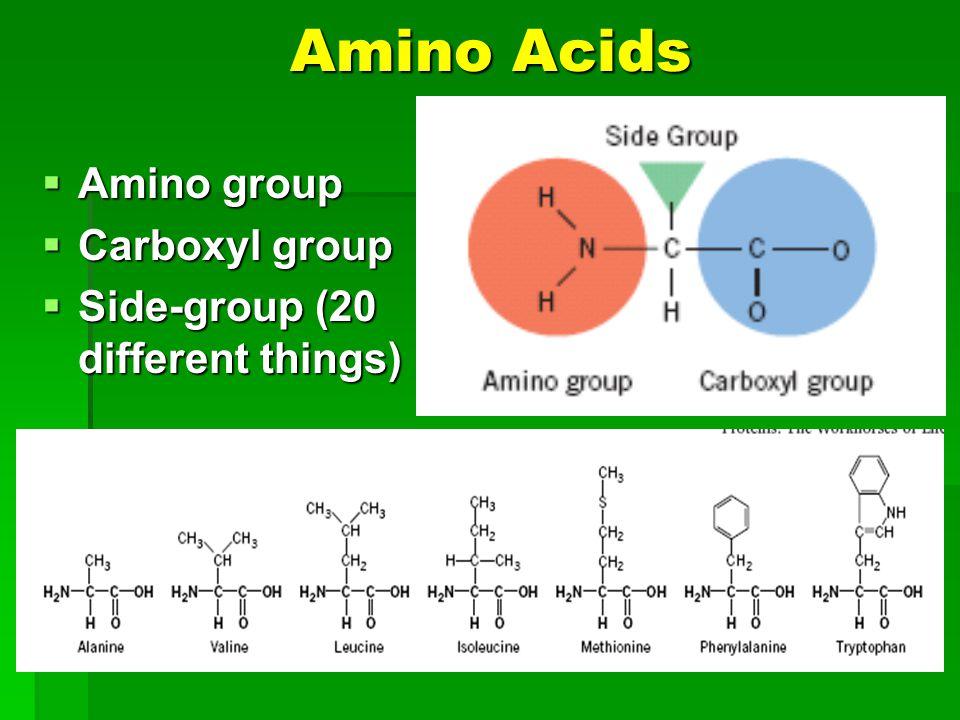 Amino Acids Amino group Amino group Carboxyl group Carboxyl group Side-group (20 different things) Side-group (20 different things)