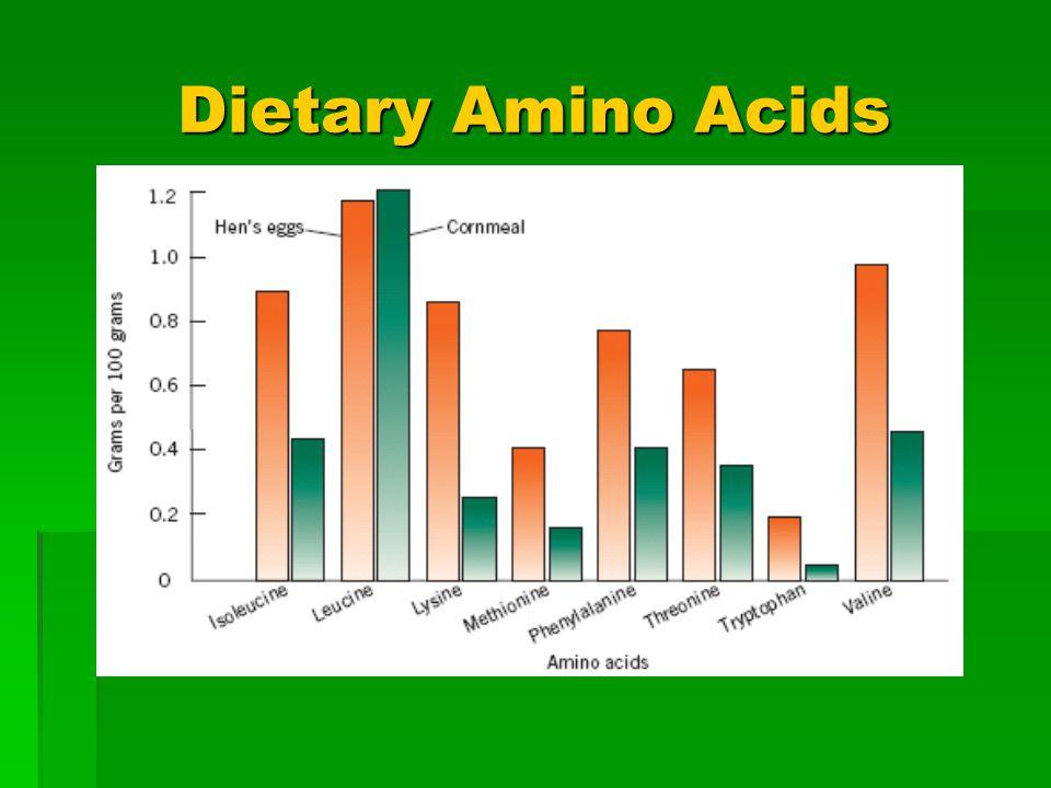Dietary Amino Acids