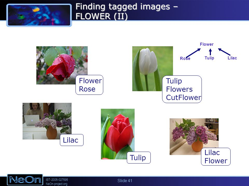 IST-2005-027595 NeOn-project.org Slide 41 Flower Rose Lilac Flower Tulip Flowers CutFlower Tulip Finding tagged images – FLOWER (II) Rose Tulip Flower