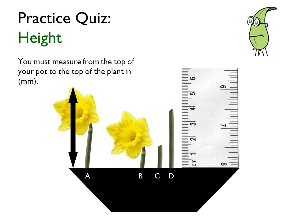 You must measure from the top of your pot to the top of the plant in (mm).