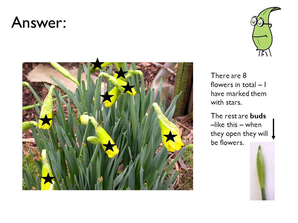 Answer: There are 8 flowers in total – I have marked them with stars.