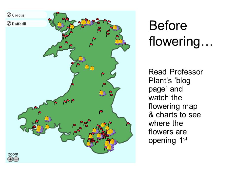 Before flowering… Read Professor Plants blog page and watch the flowering map & charts to see where the flowers are opening 1 st