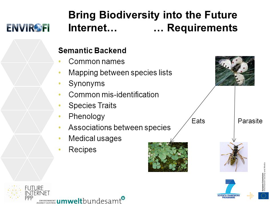 30 EatsParasite Bring Biodiversity into the Future Internet… … Requirements Semantic Backend Common names Mapping between species lists Synonyms Common mis-identification Species Traits Phenology Associations between species Medical usages Recipes