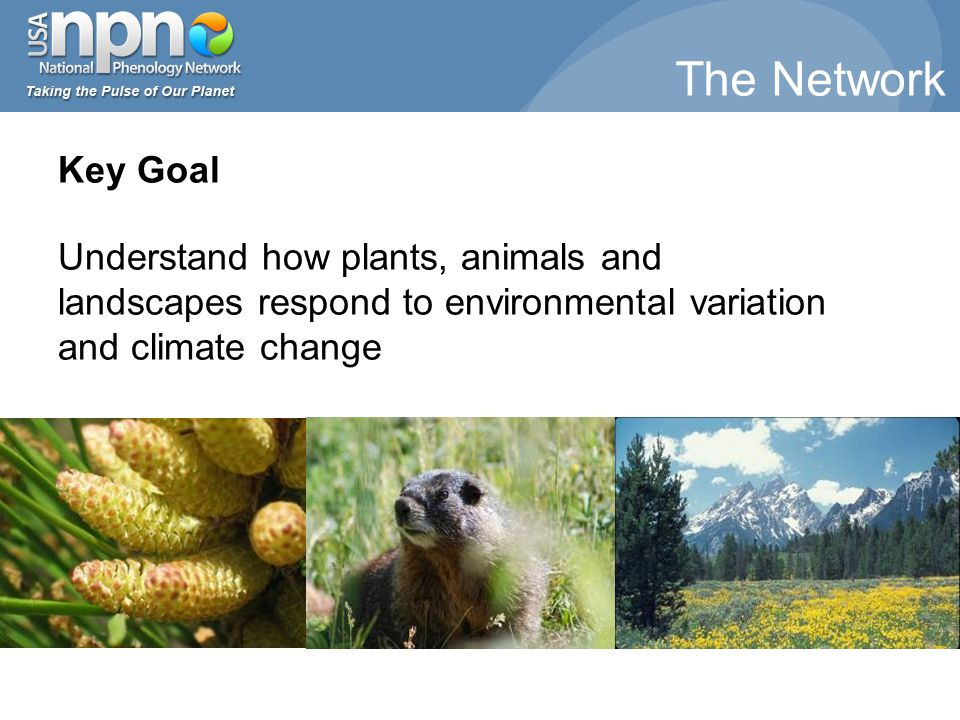 Key Goal Understand how plants, animals and landscapes respond to environmental variation and climate change The Network