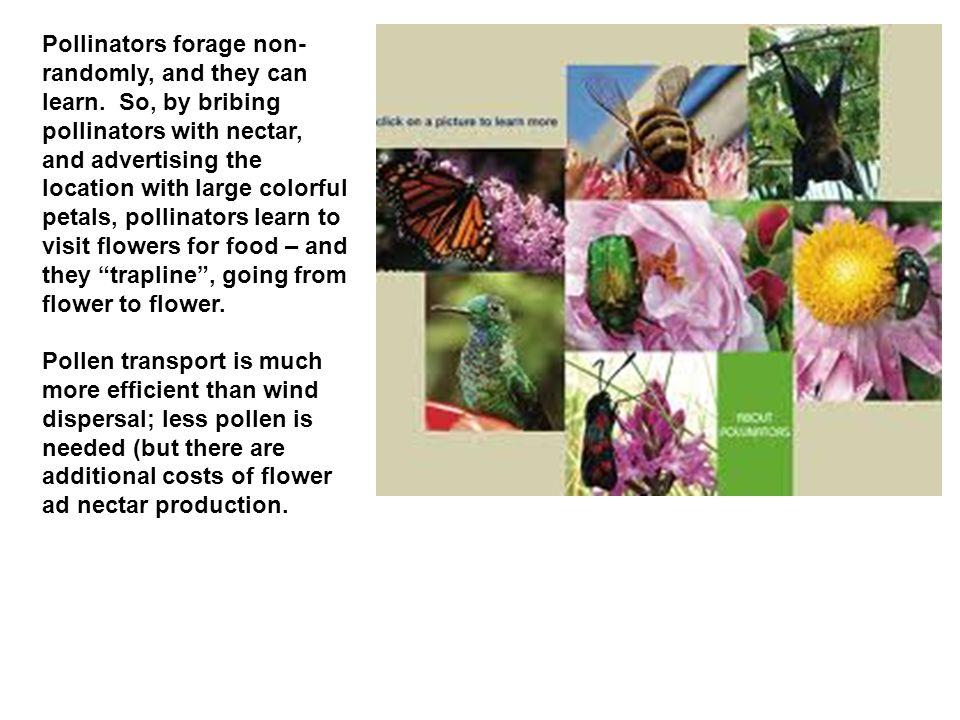 5.Tracheophytes b. Groups i. Lycopodiophytes ii. Monilophytes iii.