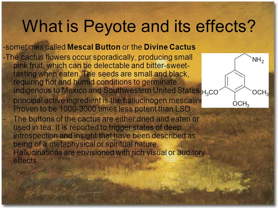 What is Peyote and its effects.
