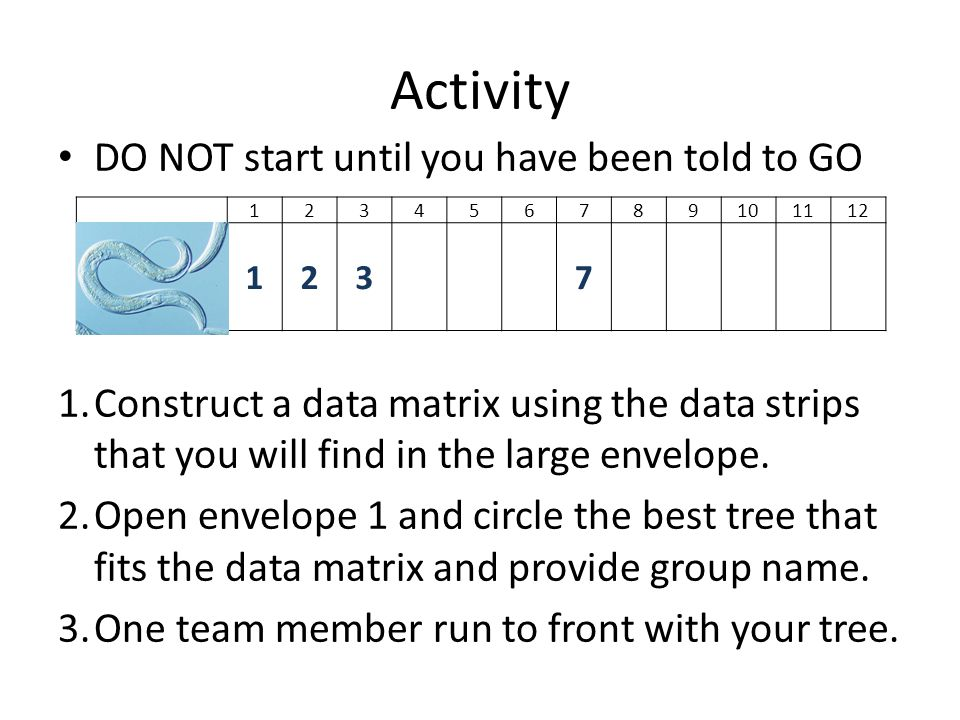 Activity DO NOT start until you have been told to GO 1.Construct a data matrix using the data strips that you will find in the large envelope. 2.Open