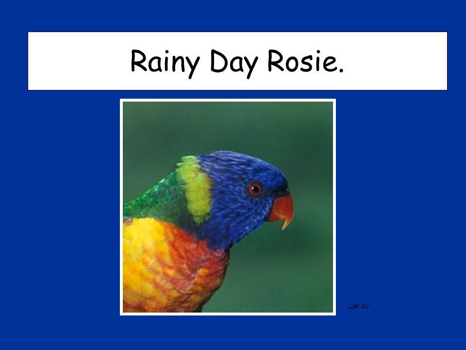 Rainy Day Rosie. QM RV