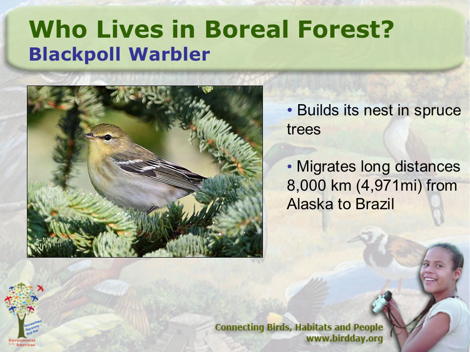 Who Lives in Boreal Forest.