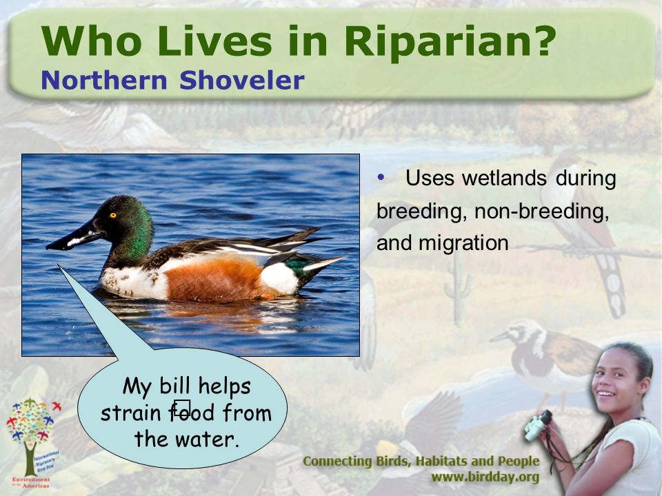 Who Lives in Riparian.