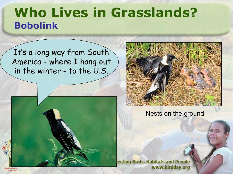 Who Lives in Grasslands.