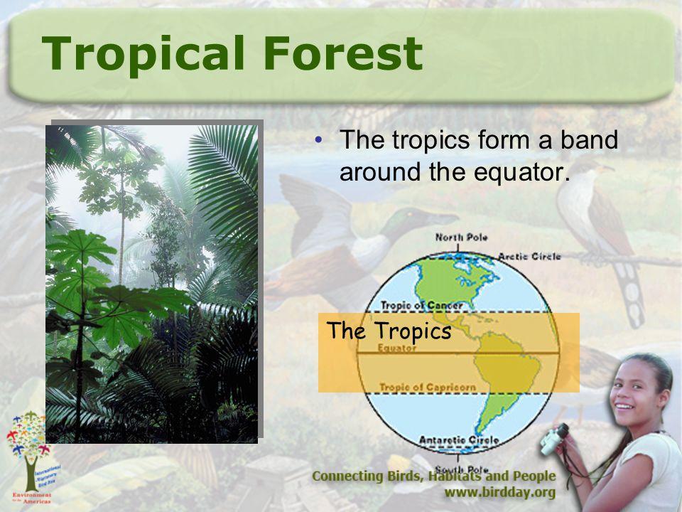 Tropical Forest The tropics form a band around the equator. The Tropics