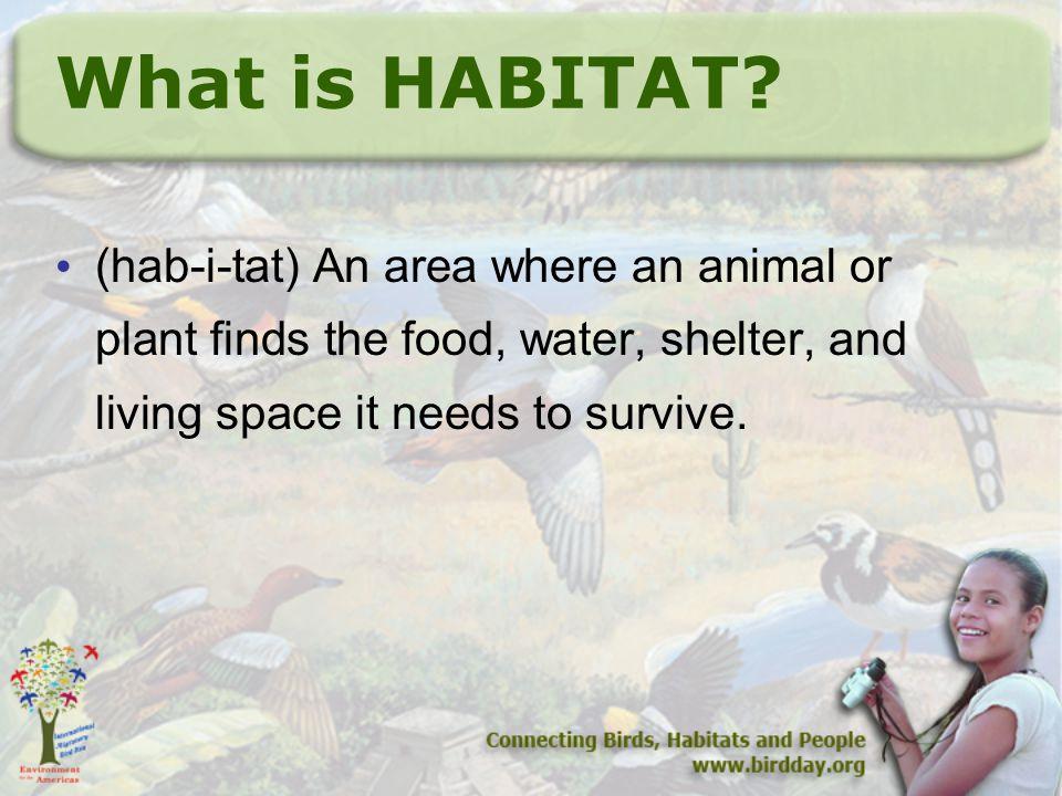 What is HABITAT.