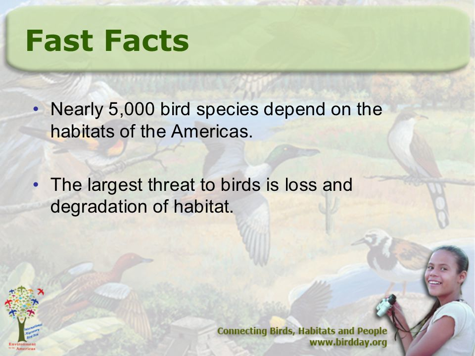 Fast Facts Nearly 5,000 bird species depend on the habitats of the Americas.