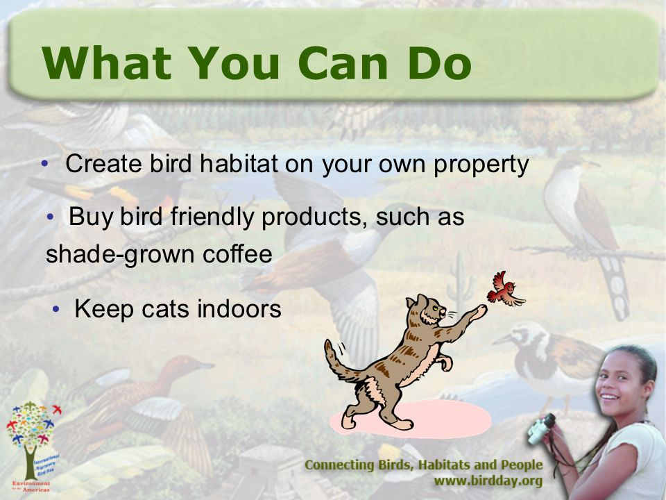 What You Can Do Create bird habitat on your own property Buy bird friendly products, such as shade-grown coffee Keep cats indoors