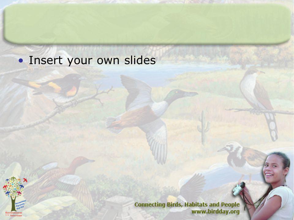 Insert your own slides