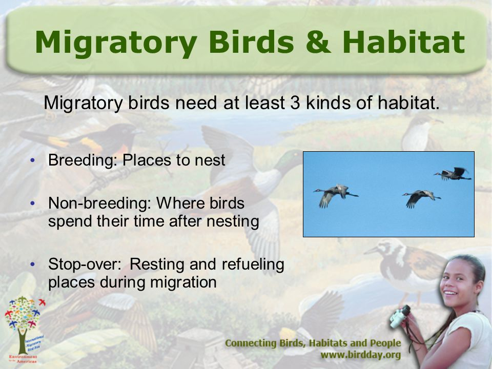 How Picky are Birds.Generalists use different habitats.