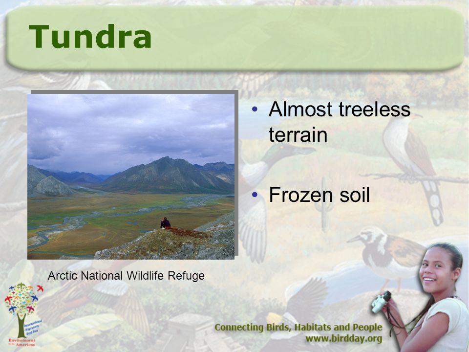 Tundra Almost treeless terrain Frozen soil Arctic National Wildlife Refuge