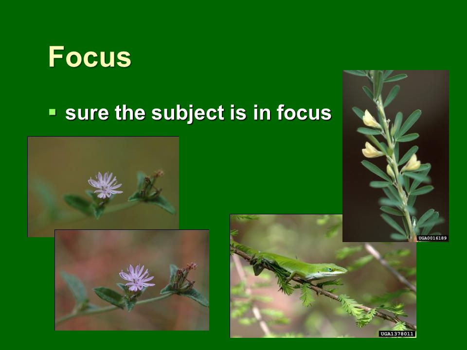 Focus sure the subject is in focus sure the subject is in focus