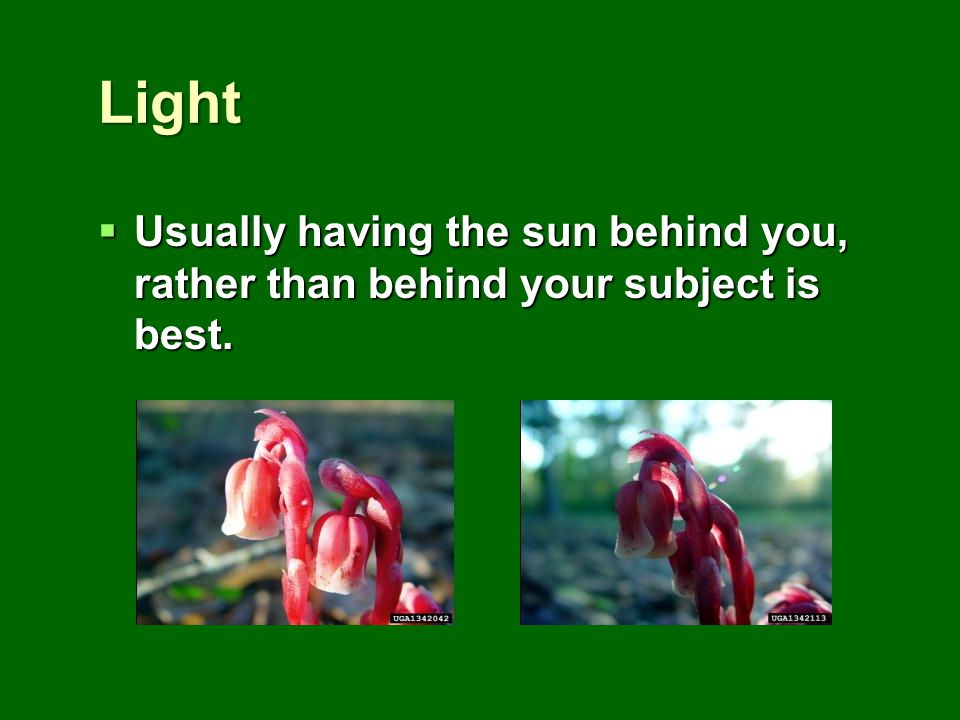 Light Usually having the sun behind you, rather than behind your subject is best. Usually having the sun behind you, rather than behind your subject i