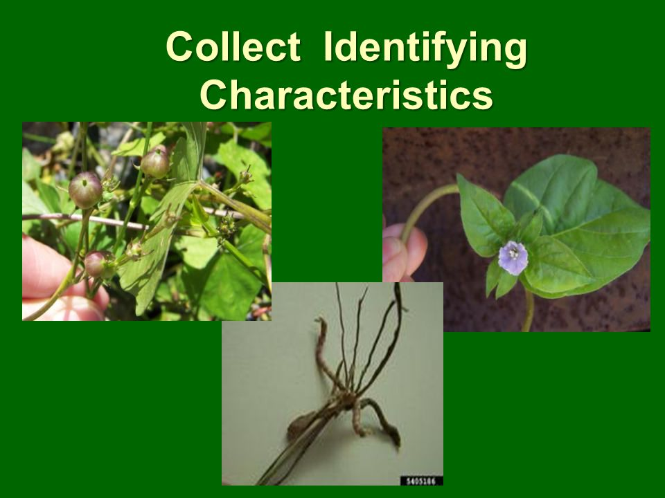 Collect Identifying Characteristics