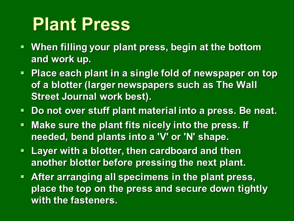 Plant Press When filling your plant press, begin at the bottom and work up. When filling your plant press, begin at the bottom and work up. Place each
