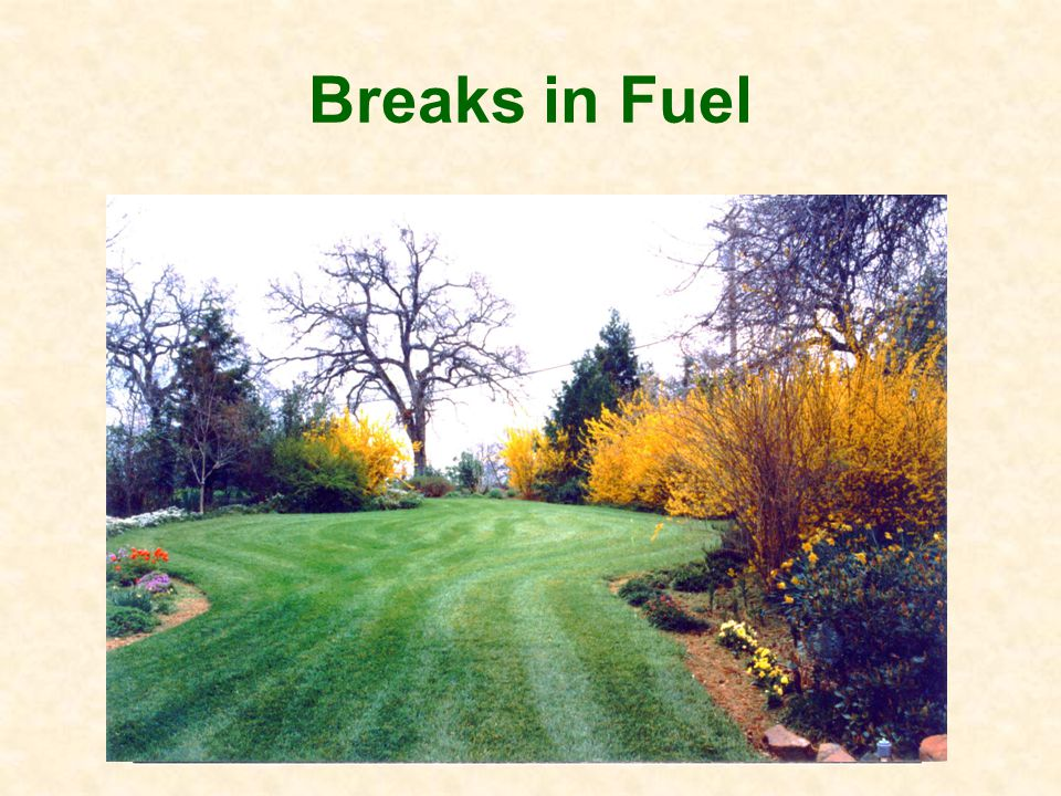 Understanding the Fire Ladder Fuel-break - trim and space plants Fuel mosaic - island plantings Trees – keep 15 or more from house Location - slope, canyons, ridges, prevailing winds