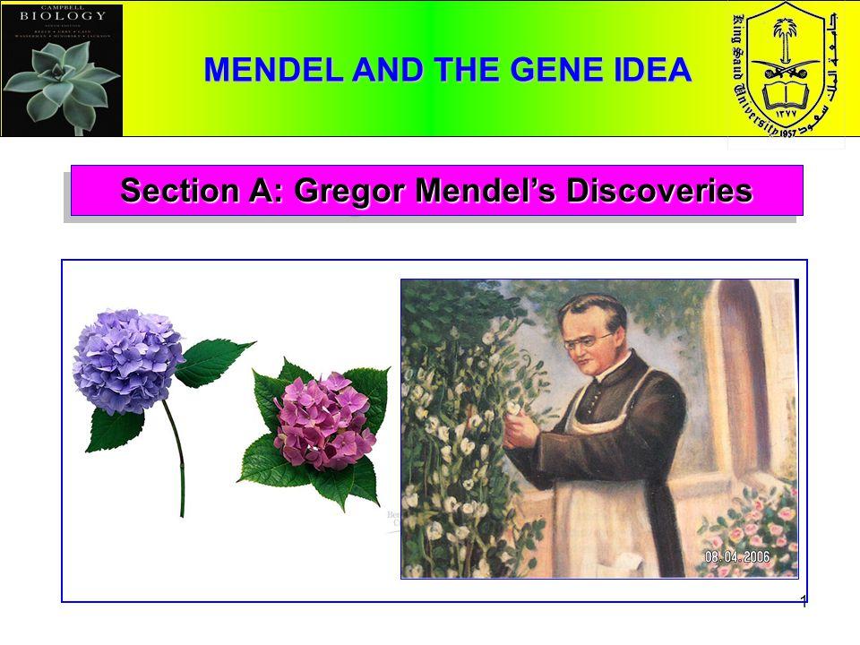 A Punnett square analysis of the flower-color example demonstrates Mendels model.A Punnett square analysis of the flower-color example demonstrates Mendels model.
