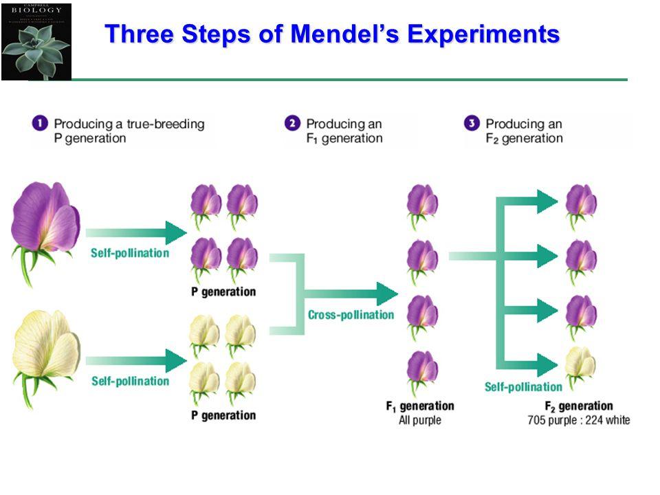 Three Steps of Mendels Experiments