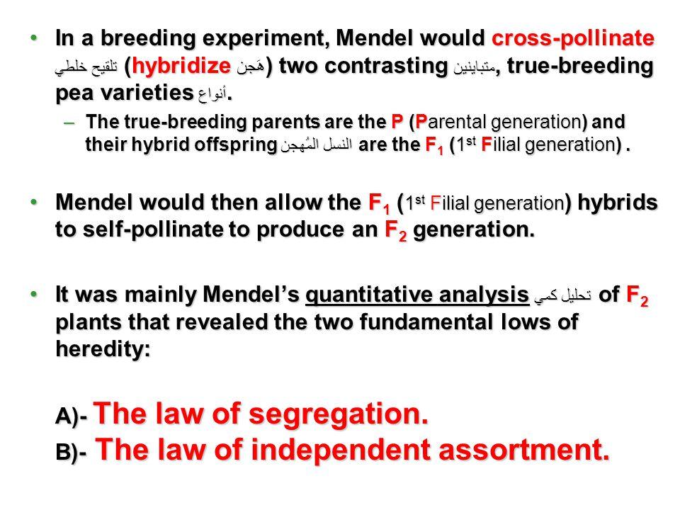 In a breeding experiment, Mendel would cross-pollinate تلقيح خلطي (hybridize هَجن ) two contrasting متباينين, true-breeding pea varieties أنواع.In a b