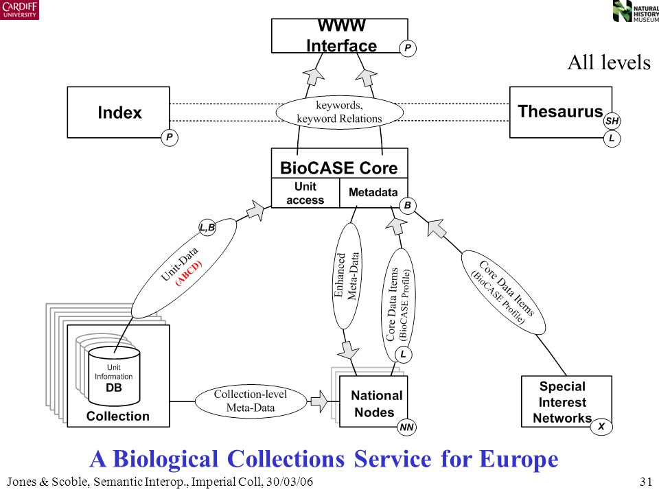 31Jones & Scoble, Semantic Interop., Imperial Coll, 30/03/06 All levels A Biological Collections Service for Europe