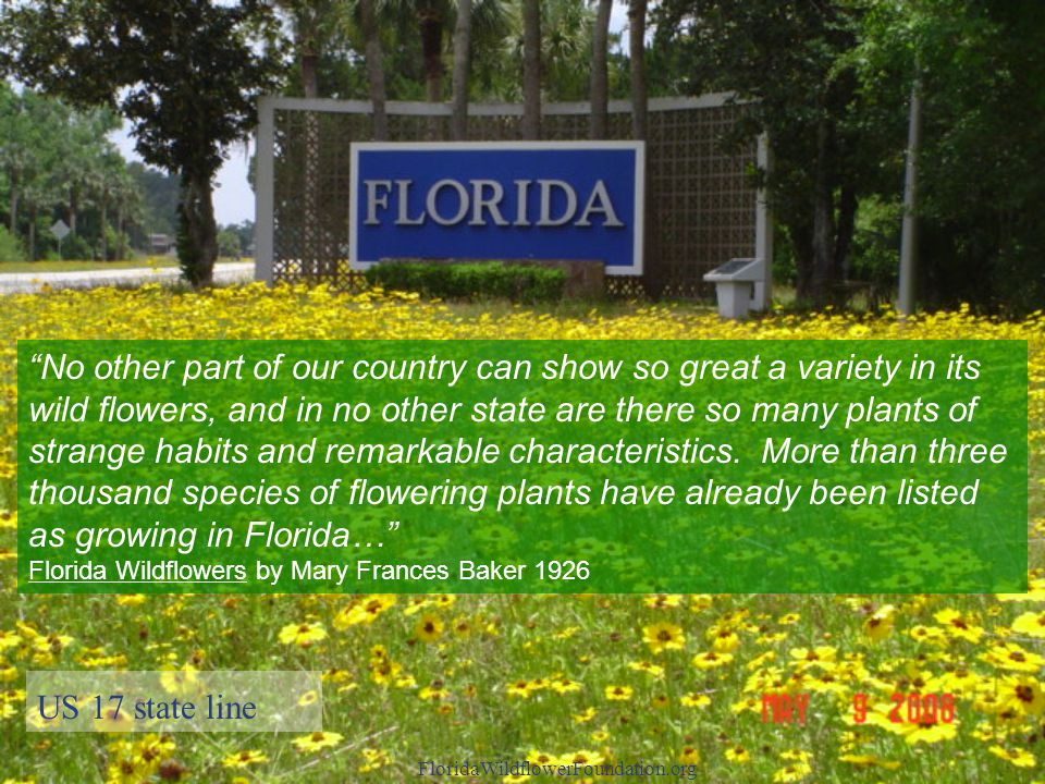 US 17 state line FloridaWildflowerFoundation.org No other part of our country can show so great a variety in its wild flowers, and in no other state are there so many plants of strange habits and remarkable characteristics.