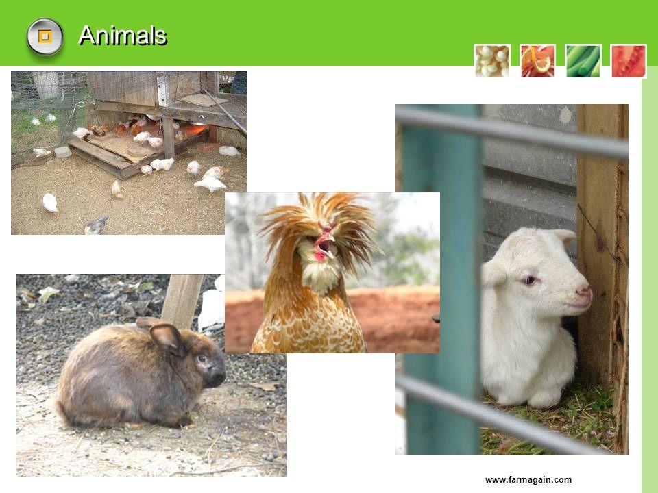 www.farmagain.com Animals