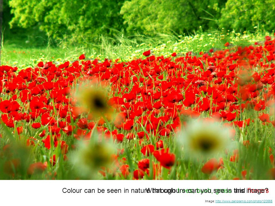 Image: http://www.panoramio.com/photo/120555http://www.panoramio.com/photo/120555 Colour can be seen in nature through trees, bush, grass and flowersWhat colours can you see in this image