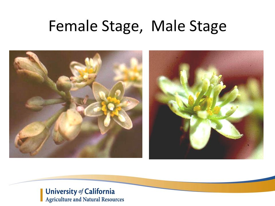 Female Stage, Male Stage