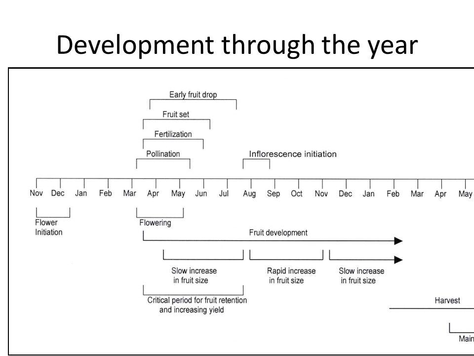 Development through the year