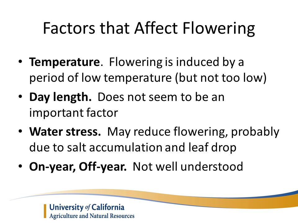 Factors that Affect Flowering Temperature. Flowering is induced by a period of low temperature (but not too low) Day length. Does not seem to be an im